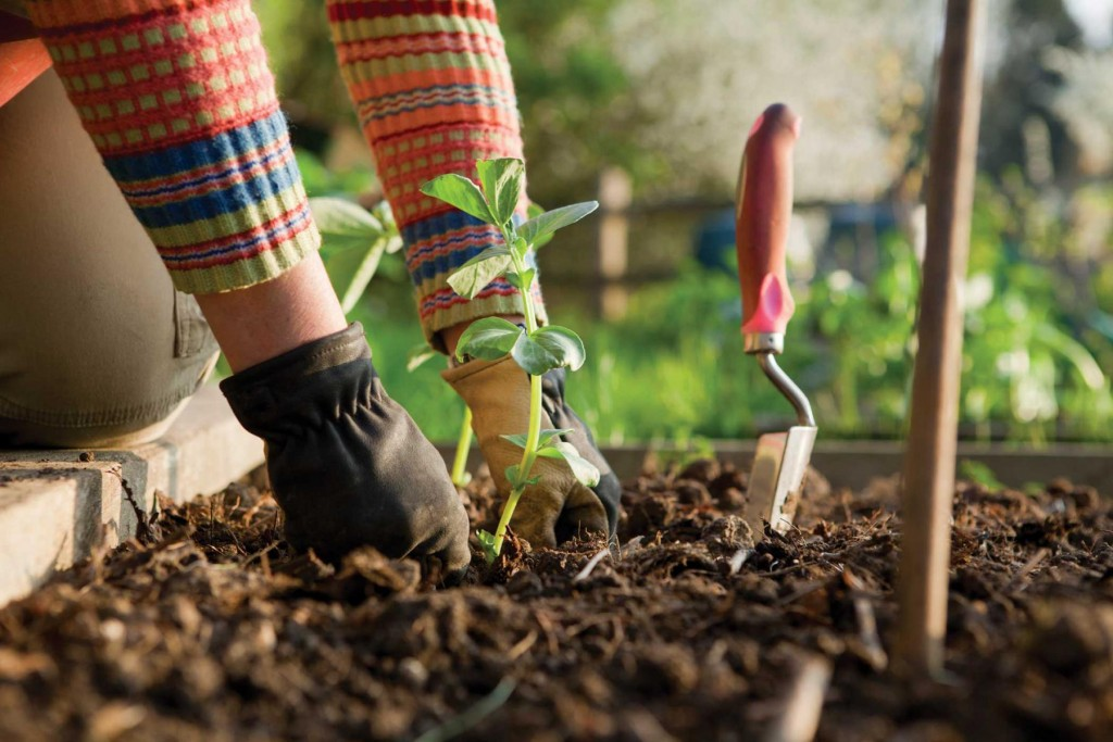 Côté Jardin : la rubrique jardinage