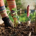jardinage-aide-a-domicile-biscarrosse1437038607